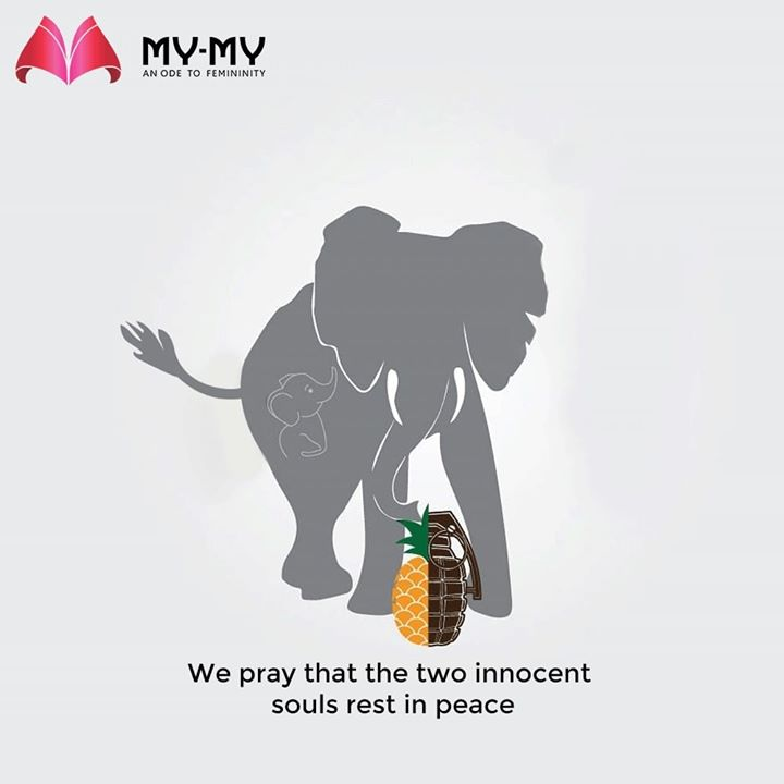 We pray that the two innocent souls rest in peace.    #RIPElephant #MyMyEdition #StayHome #StaySafe #CoronaVirus #Covid19 #ProtectYourself #IndiafightsCorona